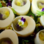 Young hearts of palm aspic