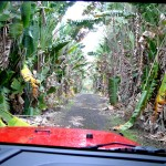Arriving at Wailea Agricultural Group Farm